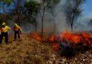 Hasta 20 incendios diarios reportan en Yucatán