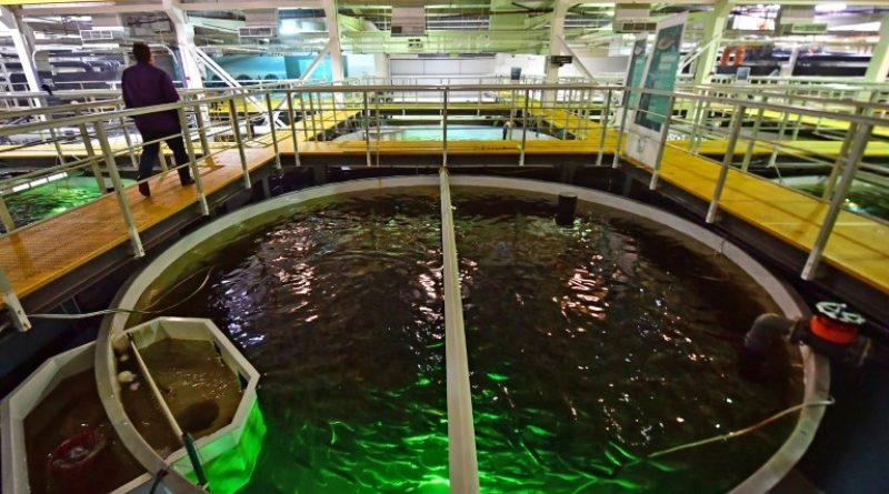 """Resultado de imagen de produccion de salmon en dubai"""""""